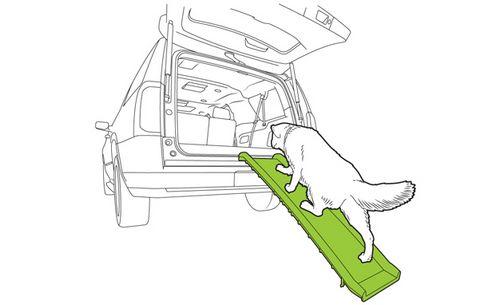 Пять способов защитить вашу собаку в машине