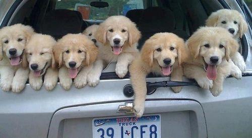 Способы перевозки домашних животных в автомобиле