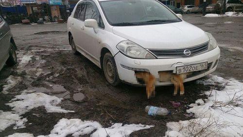 В таганроге проверяют информацию о водителе, ездящем со сбитой собакой