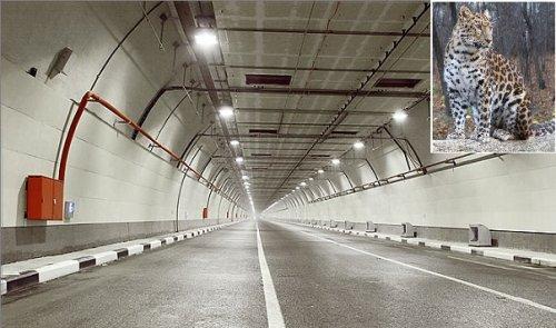 Вприморье запущен экологический «леопардовый» автотоннель - «транспорт»