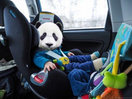 Вроссии запретили оставлять детей до7 лет вавтомобилях - «транспорт»